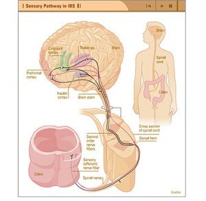 Pijn linkerkant buik darmen